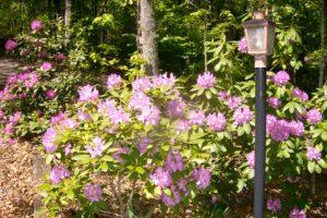 azaleas-lightpost