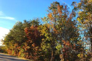 fall-colors-along-road